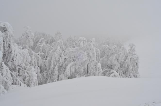 Ponad lasem, pod przełęczą (Orłowicza)