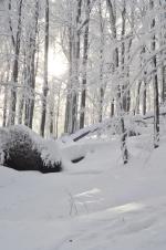 Zimowy las na stokach Działu