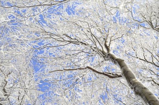 Do nieba rosną drzewa