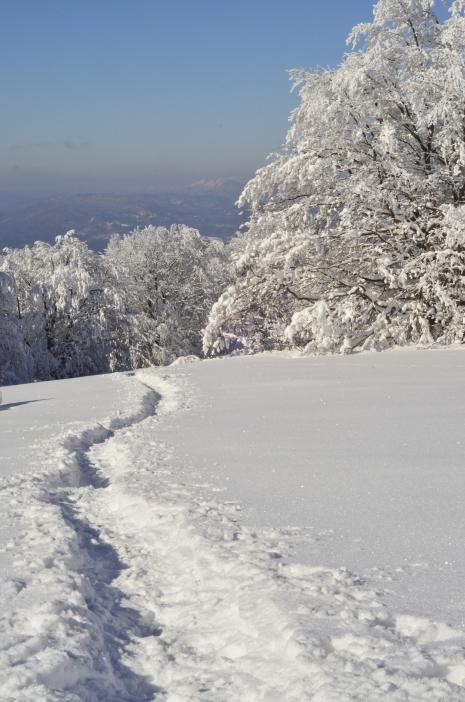 Scieżki w śniegu (Dział)