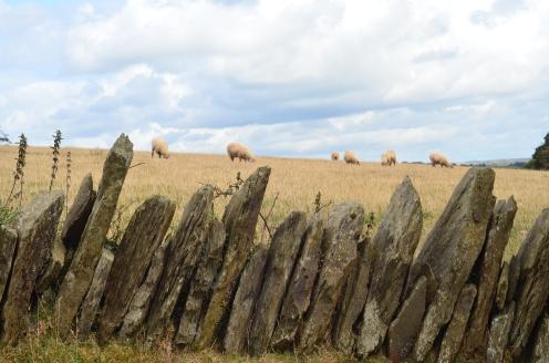 Jedna z form ogradzania pól i pastwisk