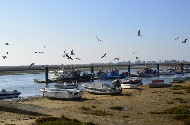 Gdzie woda i ryby, tam i ptactwa zgraja