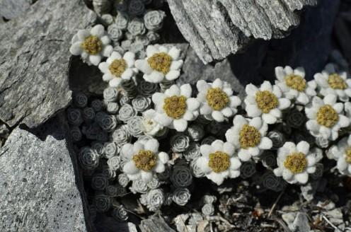 """Malutkie, """"wełniane"""" kwiatki"""