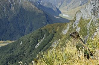 Kea przyłączyła się do podziwiania widoków z Cascade Saddle