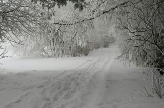 Szlak na Gromadzyniu (nad Ustrzykami Dolnymi)